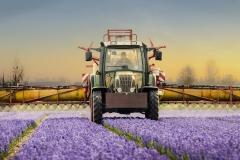 bollenveld-met-tractor